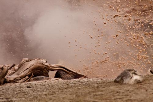 Mud pots-109